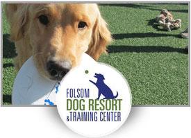 Jake Romero<br>Folsom Dog Resort