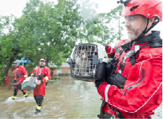 flood-dog-80